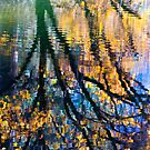Reflections II by Anne  McGinn