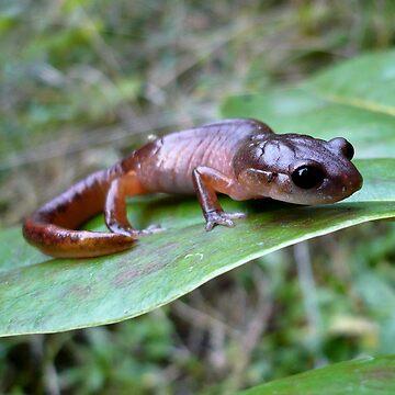 Oregon Ensatina Salamander 3 by GlockGirl40