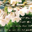 Beautiful Cherry Blossoms Antique Handwritten Letter Overlay by Beverly Claire Kaiya