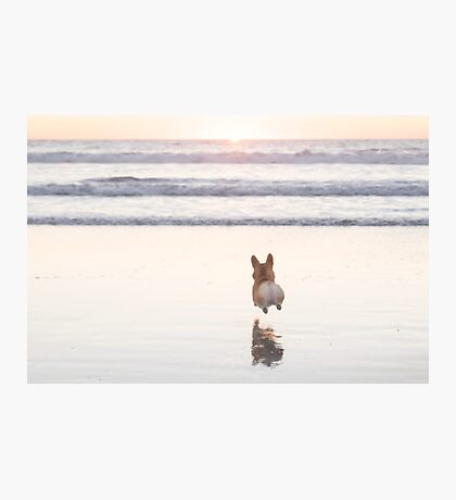 Beach Corgi Photographic Print