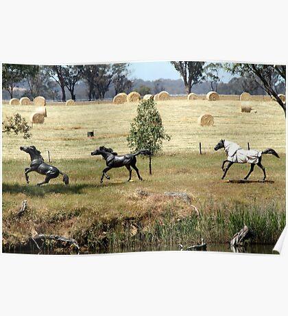 Horses at play Poster
