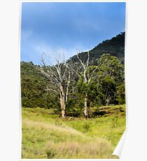 Two Trees Poster