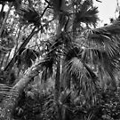 le palm by james smith