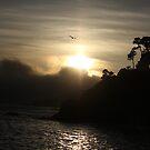 Anchor Bay Bird & Sunset by teresalynwillis