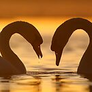 Love is in the Air  by Remo Savisaar
