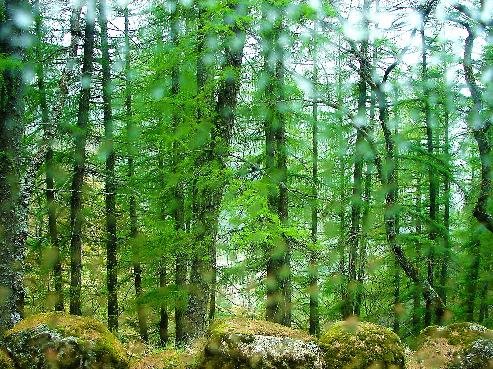 Forest green with rocks and drops of water by JoelVieira