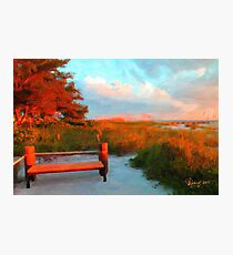 Red Sea Pine Reflection  Photographic Print