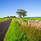 Dry Stone Walls  by Dilshara Hill