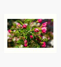 Spring Blossoms - Concord, NH 05-08-13 Art Print