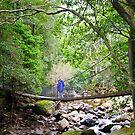 Exploring Minnamurra Rainforest by Dilshara Hill