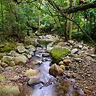 Running Stream - Minnamurra Rainforest by Dilshara Hill