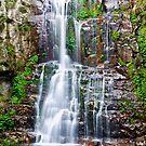 Tumbling Minnamurra Falls by Dilshara Hill
