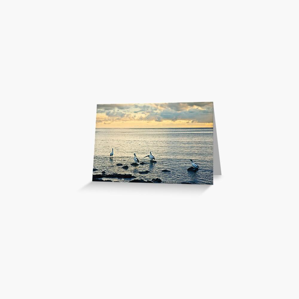 Pelicans at Black Beach - Kiama Greeting Card