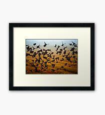 Birds. Framed Print