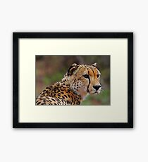 Handsome feline Framed Print