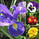 Iris Collage von BlueMoonRose