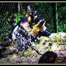African Wild Dogs Abstract by Paula Tohline  Calhoun