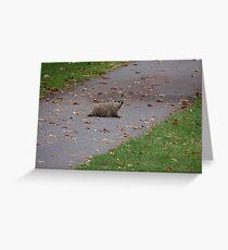 Silly Ol Groundhog Greeting Card