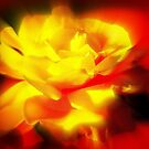 Yellow Rose with Red Background by Paula Tohline  Calhoun