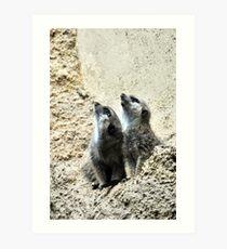 Opossum Art Print