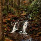 Babbling Brook by ladywings