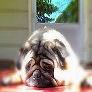 Pug Love by ladywings
