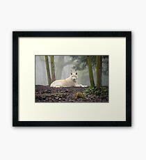 Lone Wolf Framed Print