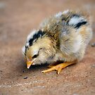 Chick by Bami