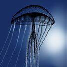 Jellyfish in Silhouette - drawn on the ipad by Ray Cassel
