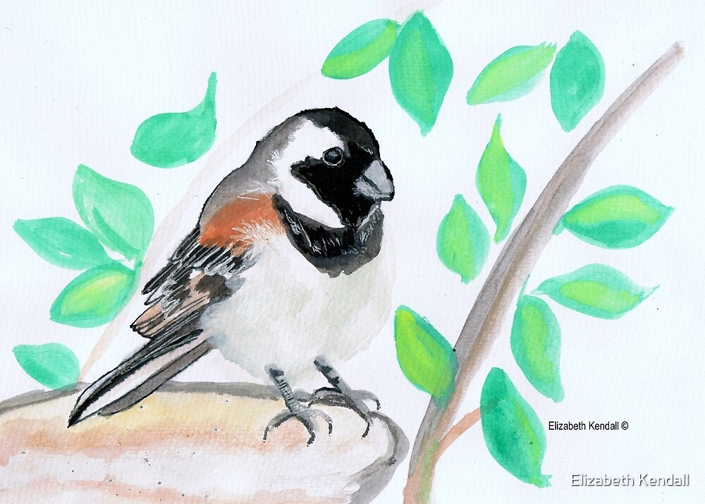 The Cape sparrow / mossie by Elizabeth Kendall