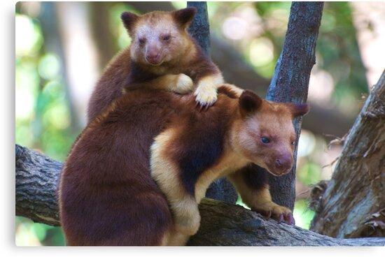 Mother & Child ~ Tree Kangaroos by Extraordinary Light