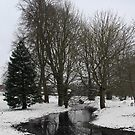Trees in snow - Goldwell Park, Newbury by Samantha Higgs