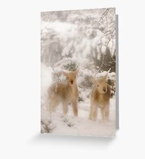 Lambs in Snow Greeting Card