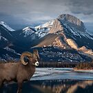 Bighorn Ram Sheep at Waters Edge by Randall Nyhof