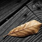 Fallen Magnolia Leaf on a Gray Wooden Deck by Randall Nyhof