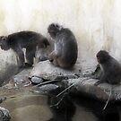 Monkey See, Monkey Do .... by SharonJH