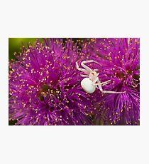 Casper, the friendly spider Photographic Print
