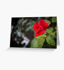 Rain Rose Greeting Card