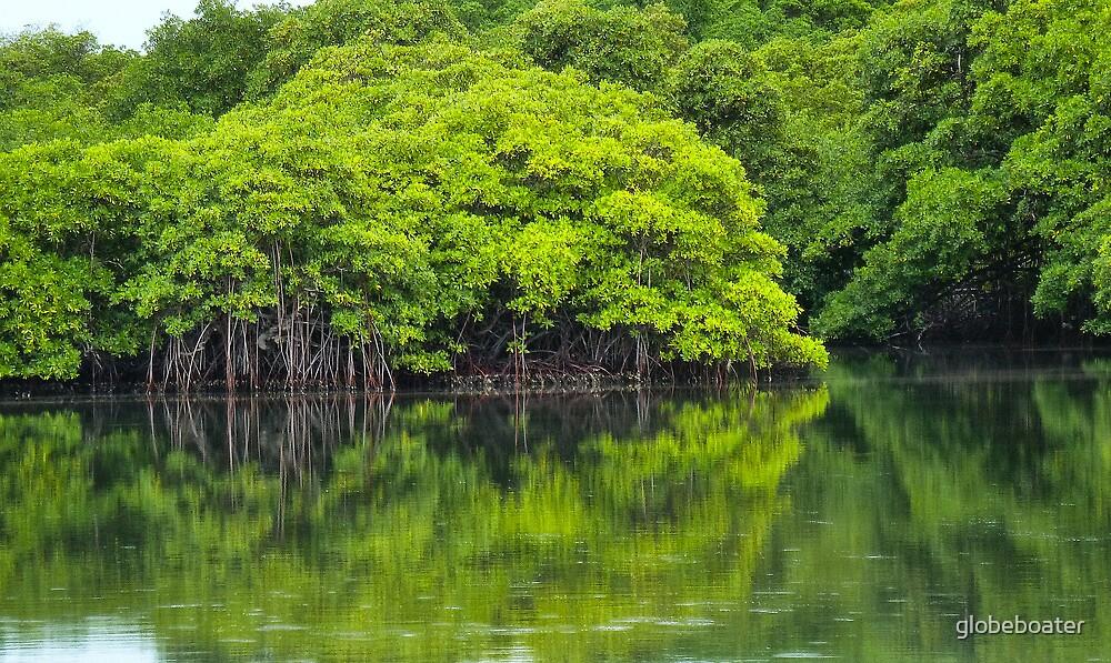 Mangroves by globeboater