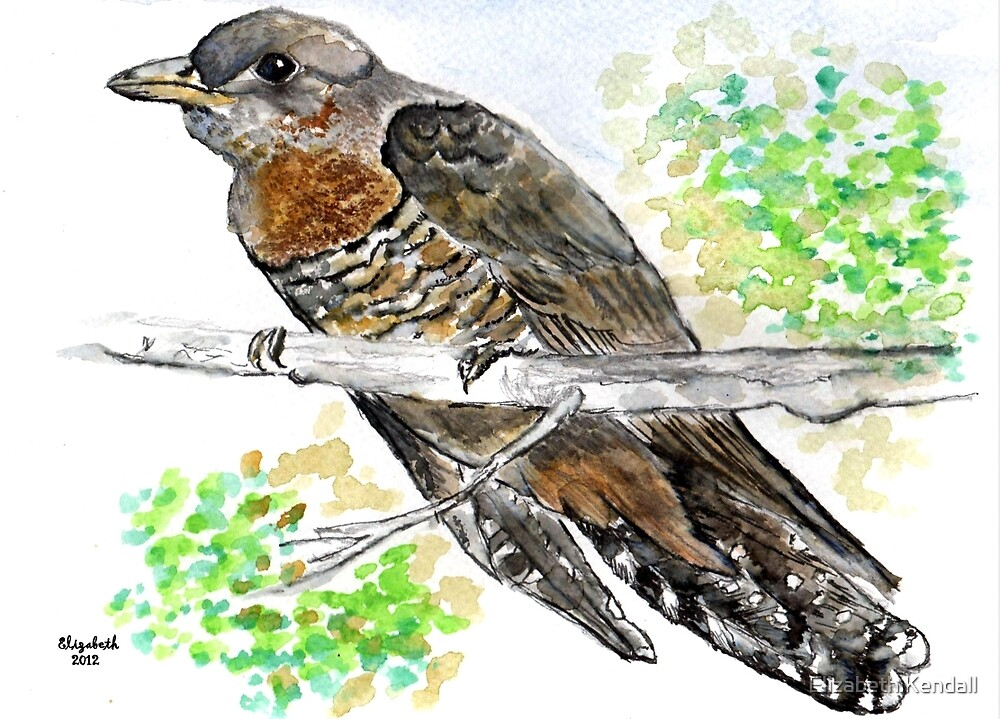 Redchested Cuckoo by Elizabeth Kendall