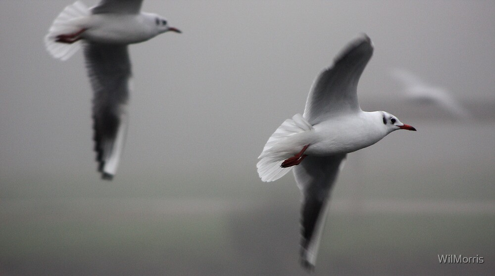Gulls in Flight by WilMorris