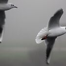 Gulls in Flight by WilMorris
