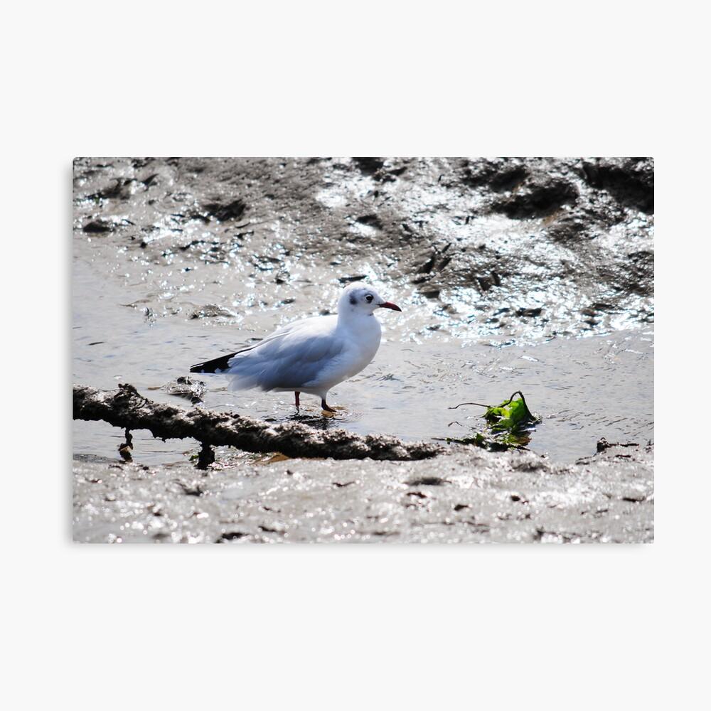 Seagull Having breakfast  Canvas Print
