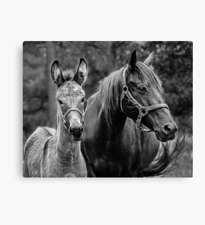 JJ and Mom Canvas Print