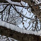 Snow Branches by Nevermind the Camera Photography