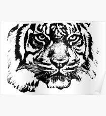 Tiger, big cat, hunter and predator Poster