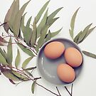 Still Life ~ Gum leaf, eggs and Mud ceramics by JoHammond