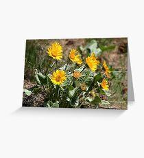 Wildflowers - Daisies ?? Greeting Card