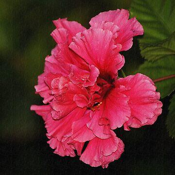 Pink Flower In Cuba by cherylorraine