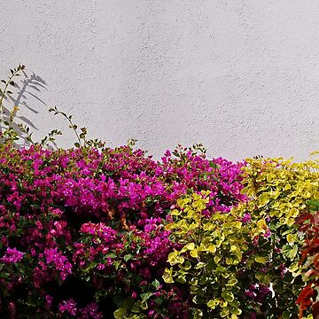 White Wall And Flowers by cherylorraine